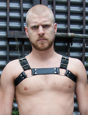 The Bruiser Bulldog Harness