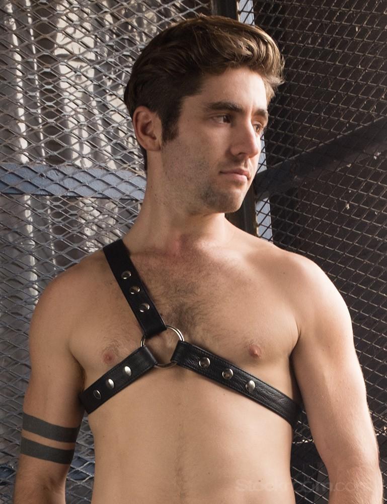 Champion Leather Harness